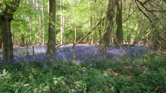 Great Gaddesden woods