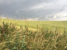 Whitehill Wood, moody sky