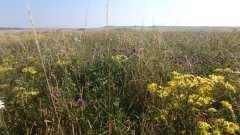 Summer flowers on High Hill