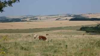 Newmarket Hill, towards Falmer