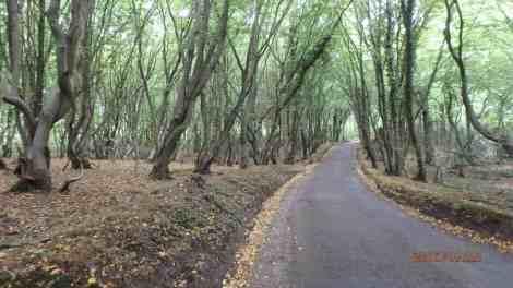School Lane, Bricket Wood