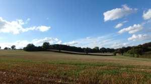 Braid Wood-Ashridge