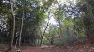 Hightree Wood
