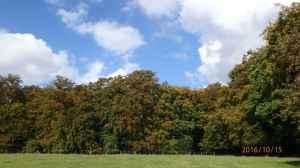 Lownde's Wood