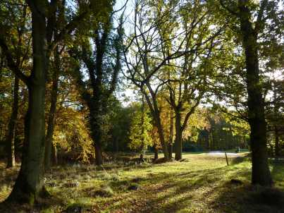 Ashridge Golf Course