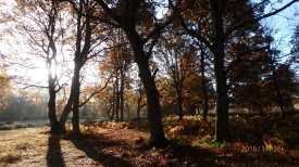 Berkhamsted Golf Course