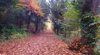 Grove Wood, Tring