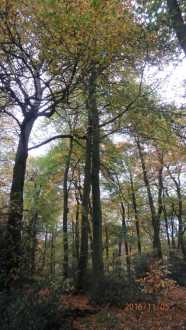 Northill Wood, Tring