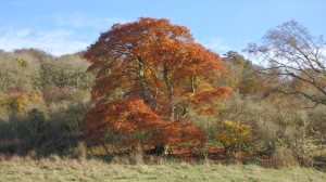 Autumn on the Ashridge Estate