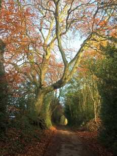 Roman Road, Frithsden