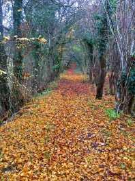 Haleacre Wood