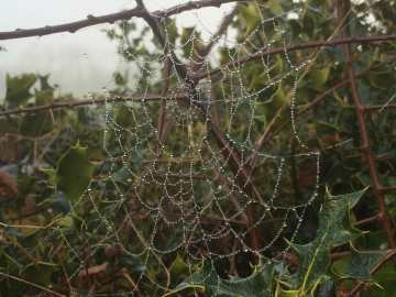 Bejewelled spider's web