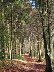Cowleaze Wood
