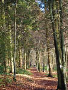 Cowleaze Wood