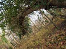 Blackmoor Wood