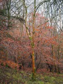 Shortridge Wood