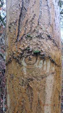 Seeing the wood from the trees