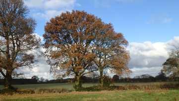 South Heath