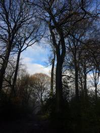 Hampden-Coppice-late-afternoon-light