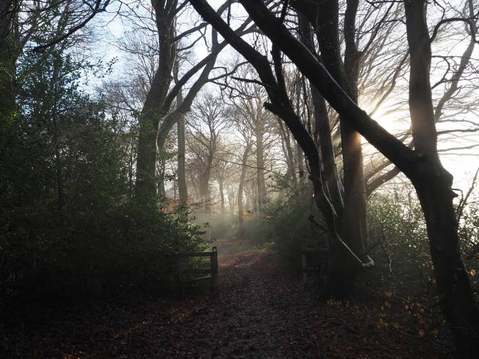 late-afternoon-Hampden-Coppice