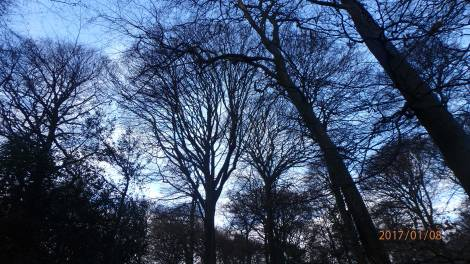 winter-tree-canopy-Monkton-Wood
