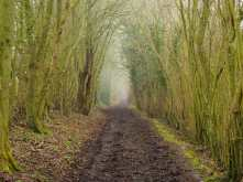 Lilly Bottom Lane