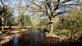 New Forest stream