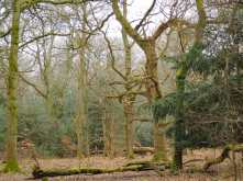 Piggot's Wood, Upper North Dean