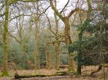 Piggot's Wood, Upper North Dean
