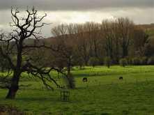 Blackwell Farm