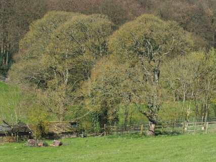 Dunsmore Old Farm