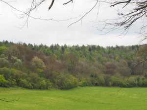 Fifty-shades-of-Green-Wendover-Woods-in-Spring