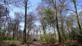 Goodmerhill Wood, Wendover