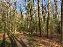 Lane Wood