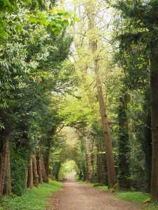 Park Wood, Tring