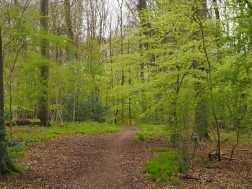Sargent's-Wood,-Princes-Risboough