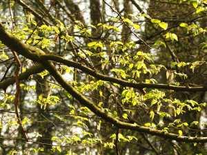 Spring colours, Little Chalfont