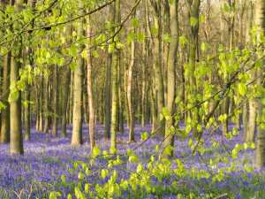Spring in Hertfordshire