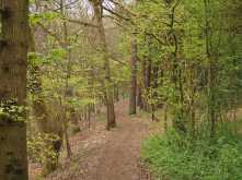 The-Ridgeway,-Wendover-Woods
