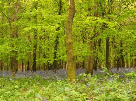Last-of-the-bluebells