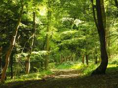 Naphill-Common