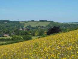 Streatley-and-the-Thames-Valley-across-the-meadows