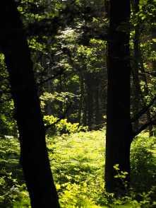 Woodland-sunlight