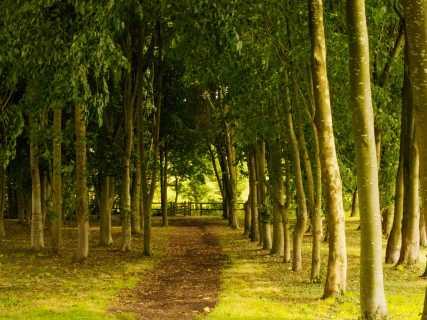 High-Wood,-Hurley