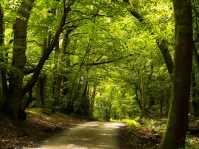 Summer lanes,-Berkshire