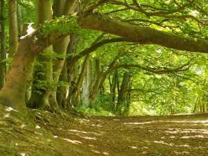 Sharpenhoe Clappers Woods,-Bedfordshire