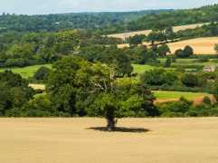 Breachers-Wood,-Little-Missenden