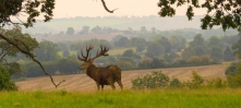 Central-Bedfordshire-stag