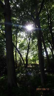 Hodgemoor-Woods,-Chalfont-St-Giles