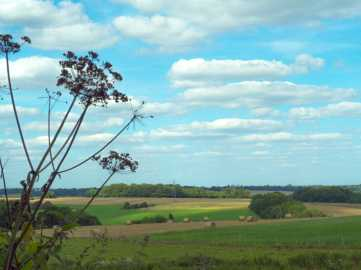 Misbourne-Valley-in-Summer